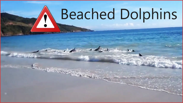 Beached dolphins - photo#11